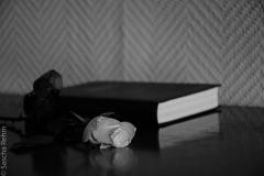 Rose und Bibel 1